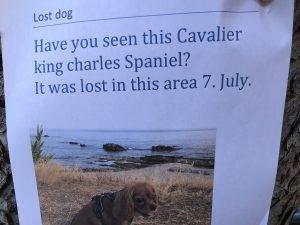Mistet hund - etterlysninger kan hjelpe